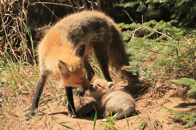 "FOX 7191  ""A tender moment with dad"""