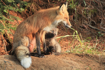 "FOX 7013  ""Hanging out with Mom"""