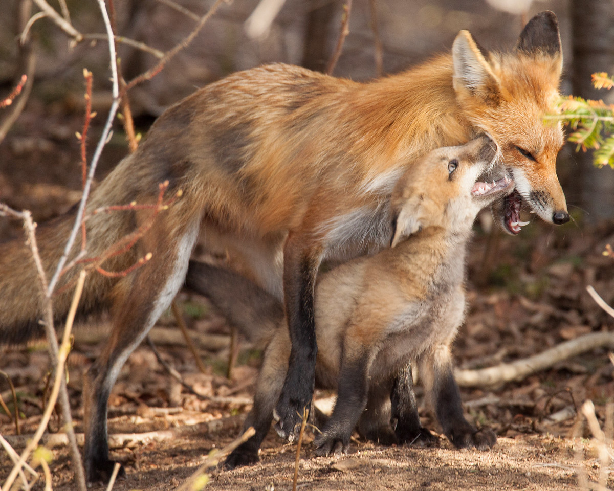 "FOX 5821<br /> <br /> ""Psssst!  I have a secret I want to tell you!"""