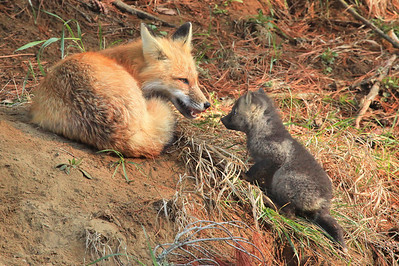 "FOX 7049  ""Visiting with Mom"""