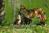Fox family love