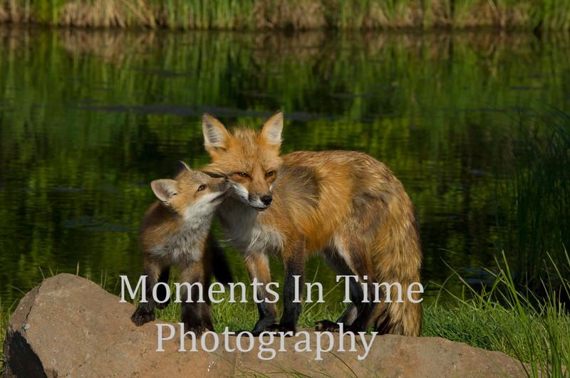 Fox tender moment x