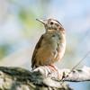 Frederick Birds 15 September 2017-7641