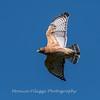 Frederick Birds 15 September 2017-7659