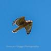 Frederick Birds 15 September 2017-7670