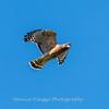 Frederick Birds 15 September 2017-7669