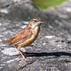 Frederick Birds 15 September 2017-7635