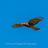 Frederick Birds 15 September 2017-7654