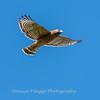 Frederick Birds 15 September 2017-7671