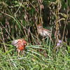 Frederick Birds 15 September 2017-7644