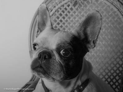 Phoebe. Photo: Martin Bager.