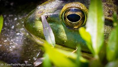 """Reflections in a Frogs Eye"""