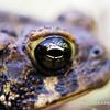 Toad Neighbor