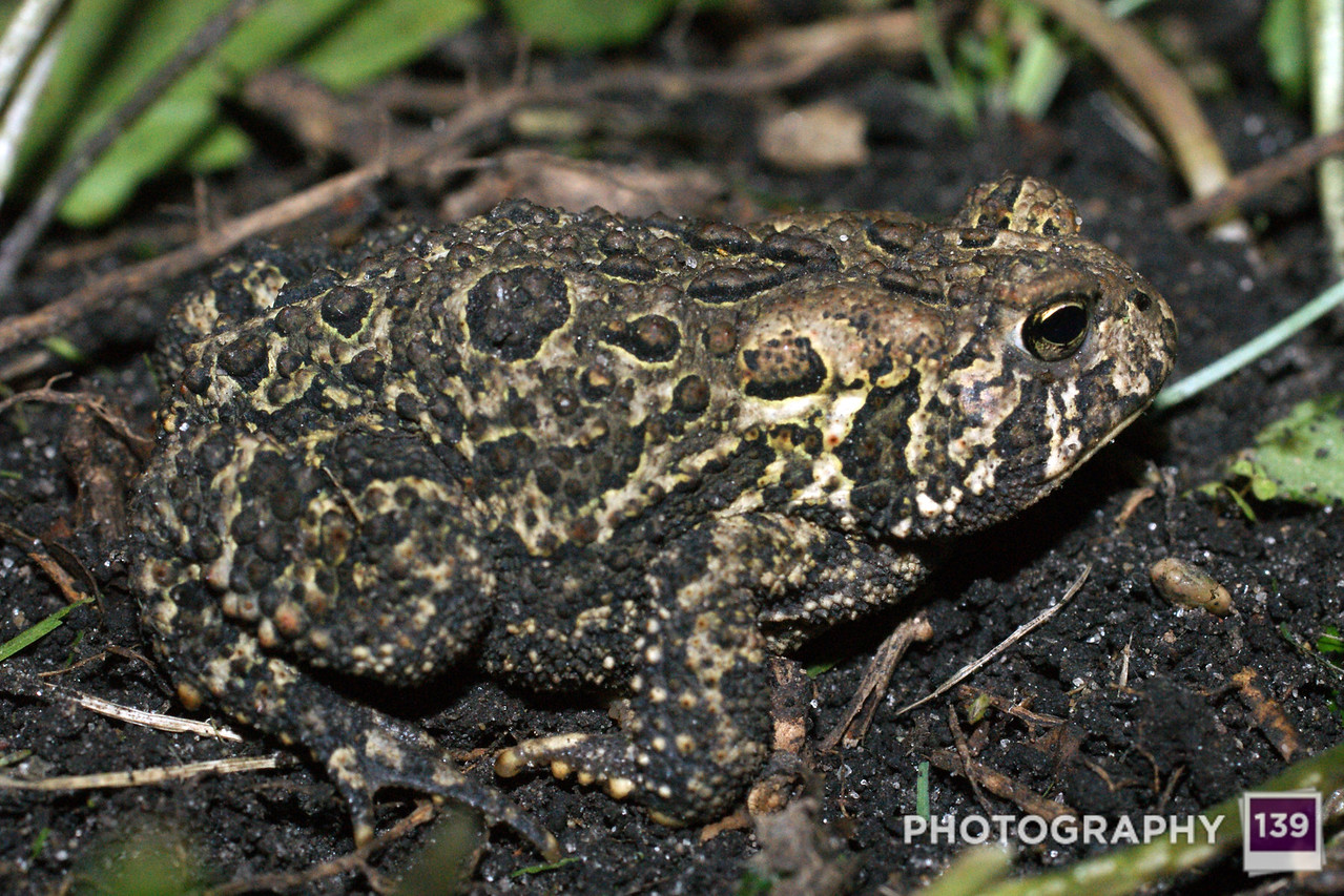 Labor Day Toad