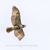 2017 September 14 Hawks birds Frying Pan Park-7536