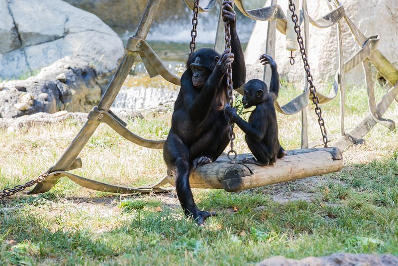 Ft  Worth Zoo (1 of 1)-2