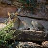 Ft  Worth Zoo (10 of 27)