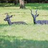 Ft  Worth Zoo (23 of 27)