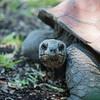 Ft  Worth Zoo (20 of 27)