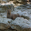 Ft  Worth Zoo (17 of 27)