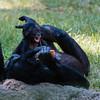 Ft  Worth Zoo (2 of 27)