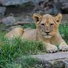 Ft  Worth Zoo (14 of 27)