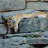Ft  Worth Zoo (11 of 27)