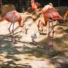Ft  Worth Zoo (24 of 27)