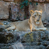 Ft  Worth Zoo (16 of 27)