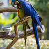 Ft  Worth Zoo (21 of 27)
