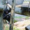 Ft  Worth Zoo (1 of 1)-4
