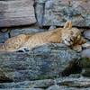 Ft  Worth Zoo (12 of 27)