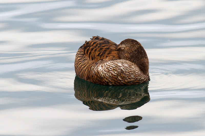 This little lady was resting by the harbour today.  A very peaceful and serene sight.
