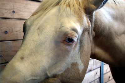 Have you ever seen a horse with blue eyes?