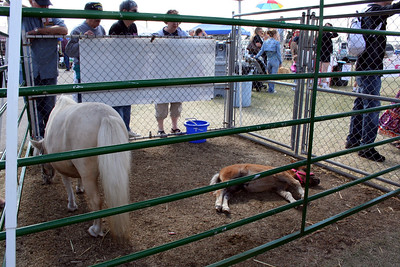 Miniture pony and her baby at the petting zoo. Aug 2010