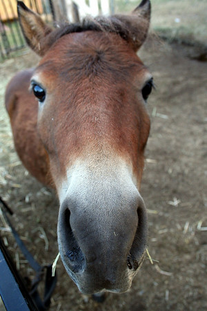 This pony wanted to check out my camera up close. He even fogged up my camera lense.