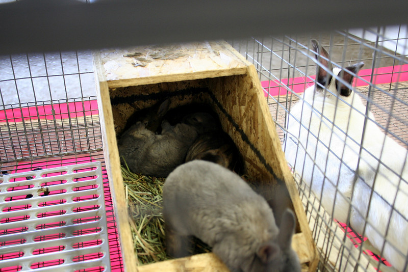They also had some very cute baby bunnies.