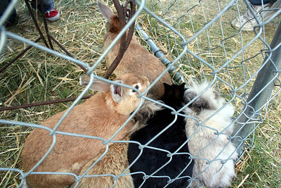 Cute bunnies at the petting zoo. As per Anissa the light brown bunnies were the softest.