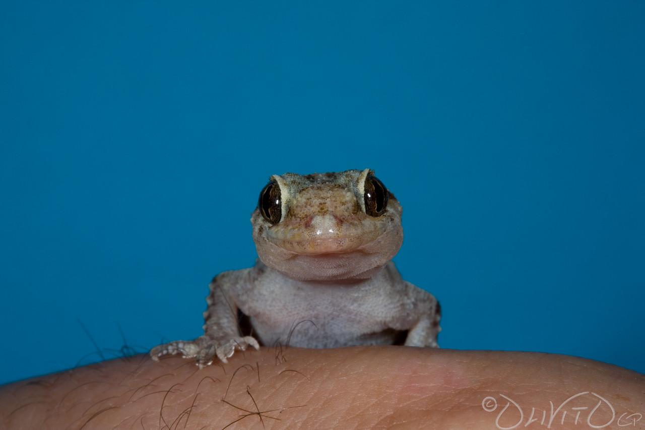 GeckoForever-01