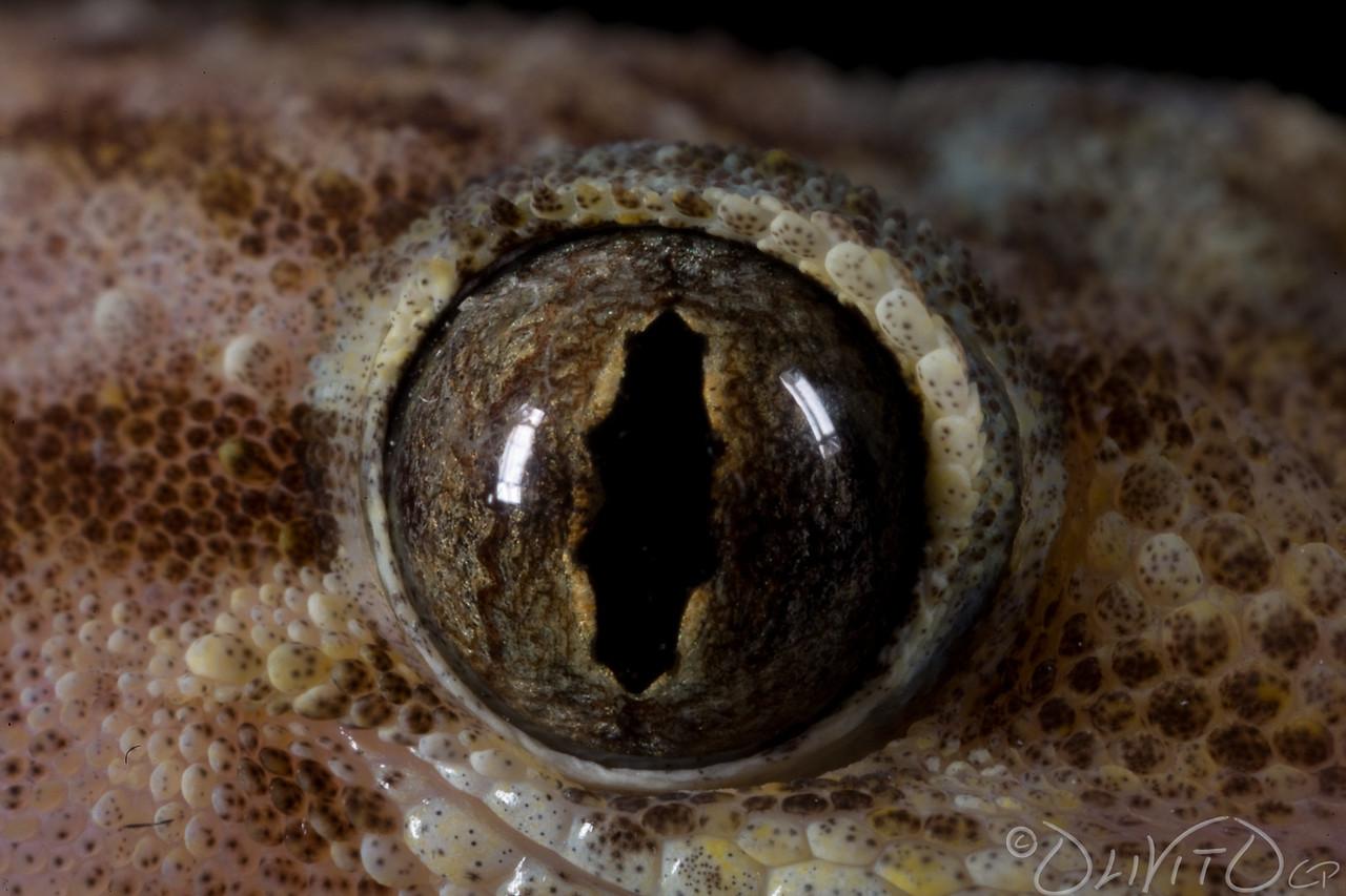 GeckoForever-06