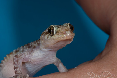 GeckoForever-03