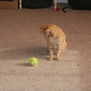 And what do I do with a tennis ball?