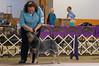 120413-GCH Fair Dinkum's Action Jaxson-008