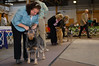 120413-GCH Fair Dinkum's Action Jaxson-001