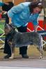 120413-GCH Fair Dinkum's Action Jaxson-003