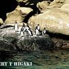 Galapagos Pengiuns
