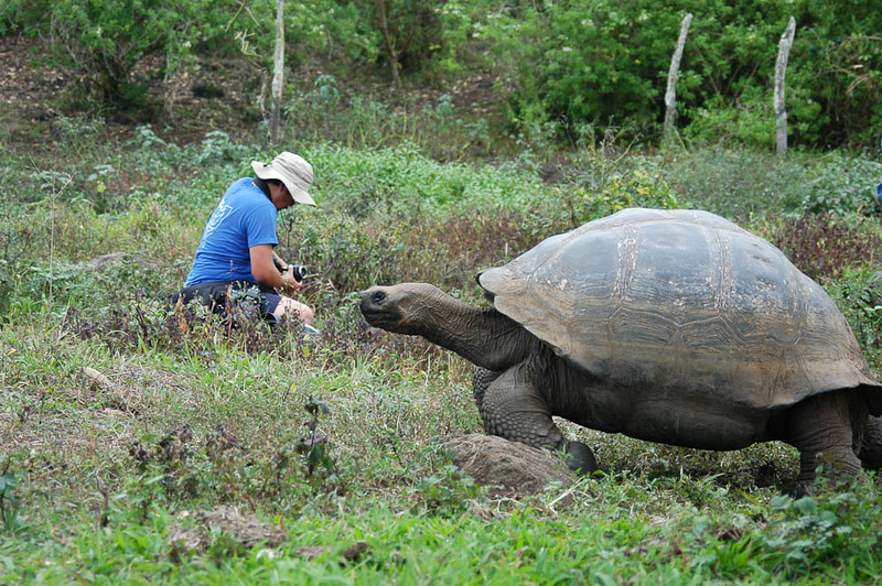 galapagos tortoise( Geochelone nigra) I had no idea my picture being taken- I was too busy changing lenses.<br />  <br />                    Thanks to Fran Stancavage for this shot!
