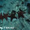 Panamic Cushion Stars