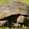 Tortoise at the Highlands
