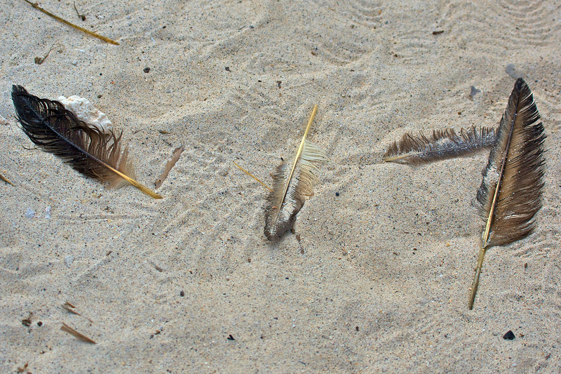 Feathers in the sand